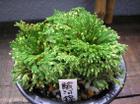 20090802suruganishiki