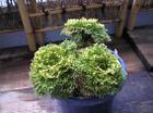 20090906kougyokunishiki4_2