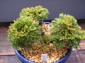 20091017kougyokunishiki1
