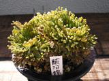 20091115suruganishiki1