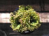 20091115suruganishiki2