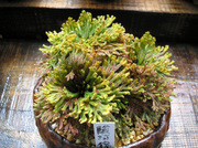 20100417suruganishiki1