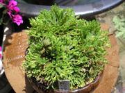 20100606suruganishiki1