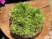 20100606suruganishiki2