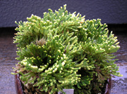 20100814suruganishiki1