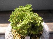 20100919kumoizuru1