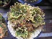 20101120suruganishiki2