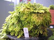 20080705sakaejishi
