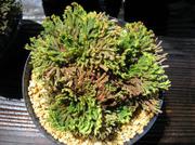 20110514suruganishiki2