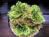 20110611suruganishiki2