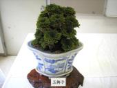 20110702tamajishi2