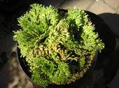 20110717suruganishiki2