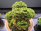 20111009botankan1