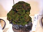 20111106sousaku3
