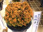 20111106kagamijishi_a1