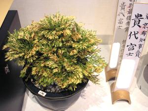 20111106kiyofuji_2