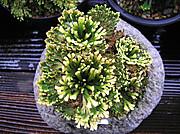 20110611kumoiduru2