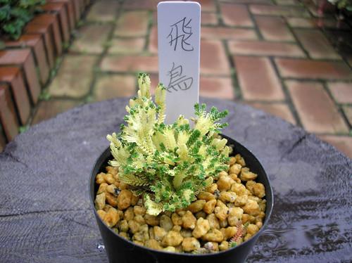 20130720asuka