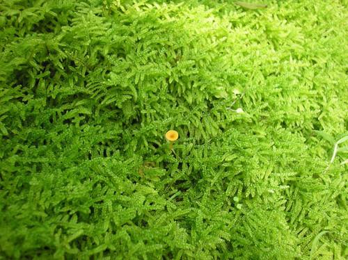 20140601green_carpet