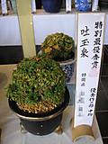 20141026chumono1_2