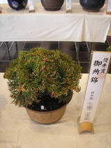 20141026goshonishiki3