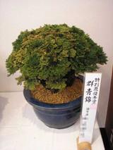 20141026gunjounishiki1