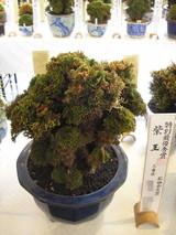 20141026shigyoku1