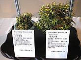 20151018_h27shintouroku