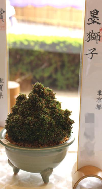 20161025sumijishi