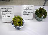 20160605benitsukuba_sachinohana