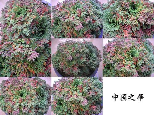 20121021chugoku_no_hana_dx