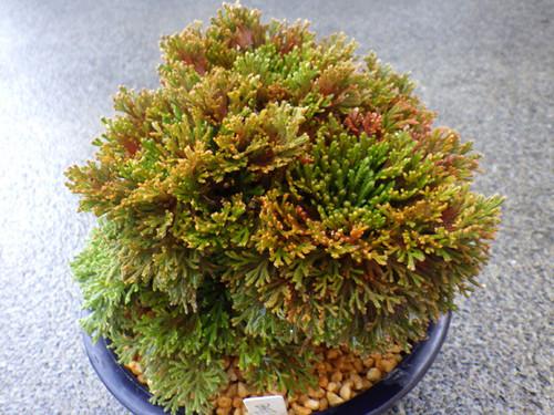 20170416kurohimeyama