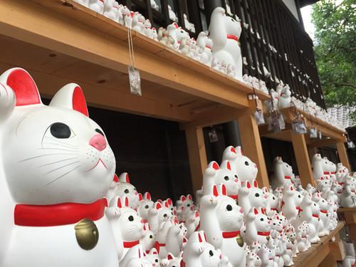 20170903manekineko2