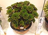 Tamajishi